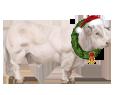 Charolais Bull ##STADE## - coat 117