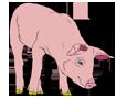 Pig ##STADE## - coat 1340000004