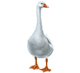 Goose ##STADE## - coat 55