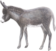 Donkey ##STADE## - coat 52