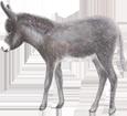Grand noir du Berry Donkey ##STADE## - coat 51
