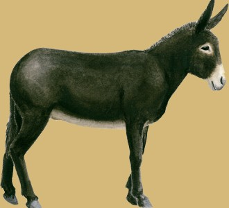 Take in a grand noir du berry donkey species farm animal
