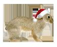 Rabbit ##STADE## - coat 117