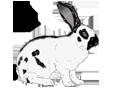 Rabbit ##STADE## - coat 1340000002
