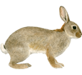 Rabbit ##STADE## - coat 52