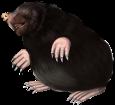 Mole ##STADE## - coat 52